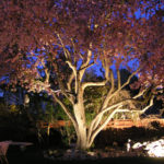 Alpine Edge Landscape Lighting - exterior lighting